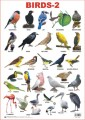 Chart for Birds-2