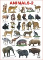 Chart for Animals-2